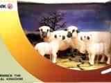 Набор «Семья овечек»